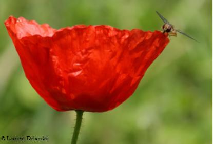 Annulée NATURE EN GATINE : PLANTES ET PAPILLONS @ La Peyratte ou LHoumois