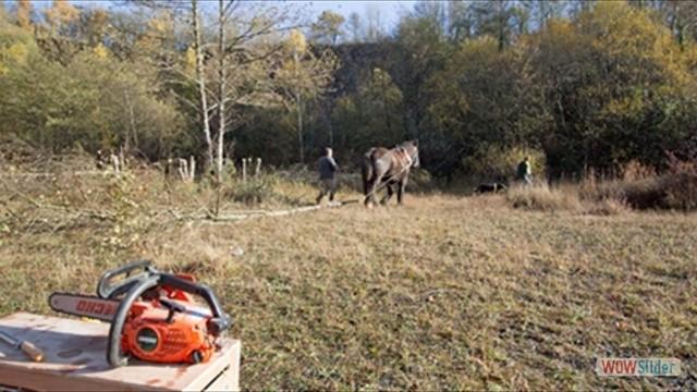 Un cheval en pleine action